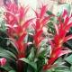 广州市多丽人鲜花
