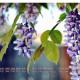 北京珍爱缘鲜花